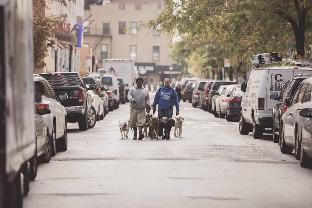 KBNA Dog Walker